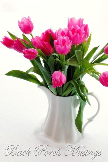 tulips11G