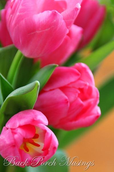 tulipsL