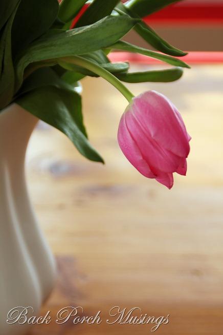 tulipsAAA3