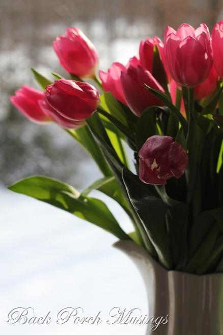 tulips11C
