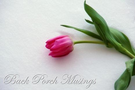tulipsI
