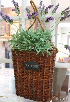 lavendar1AA