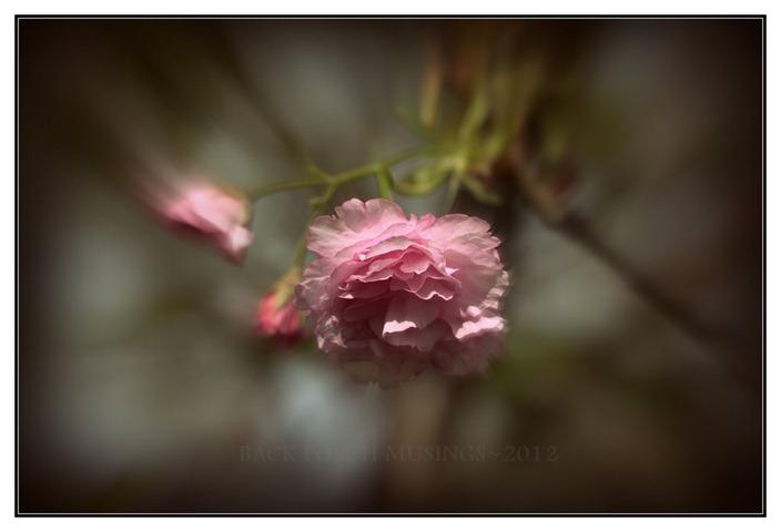 pink1-001aa