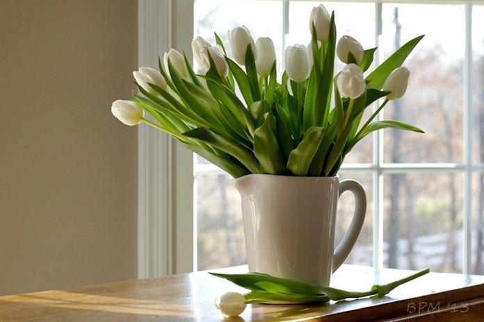 tulip29