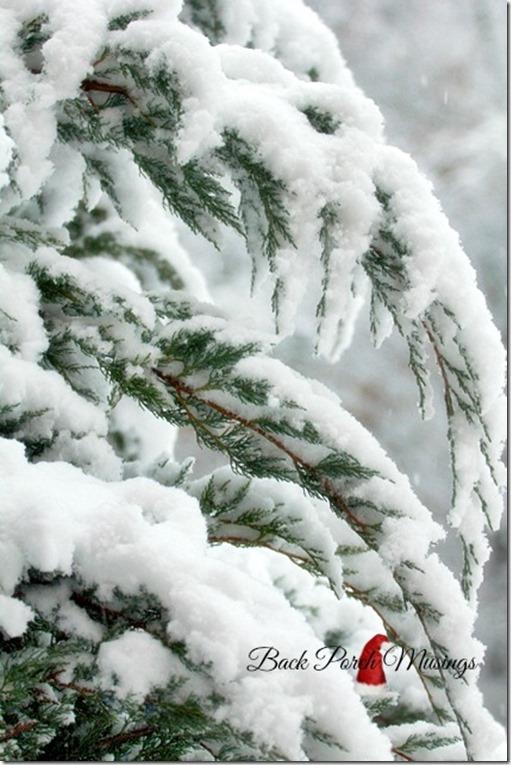 snow13d