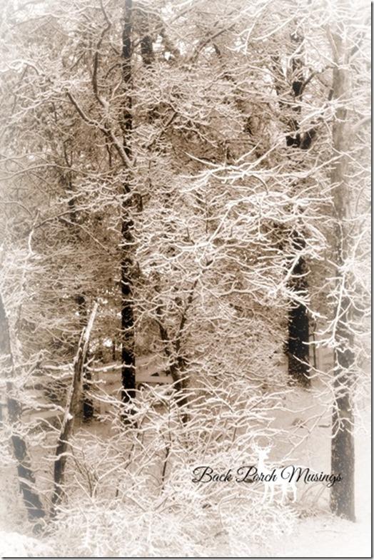 snowydayA1