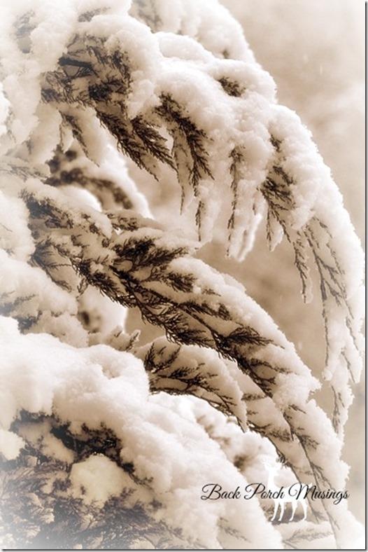 snowydayA2
