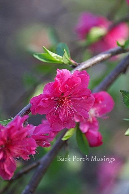 Peachy8