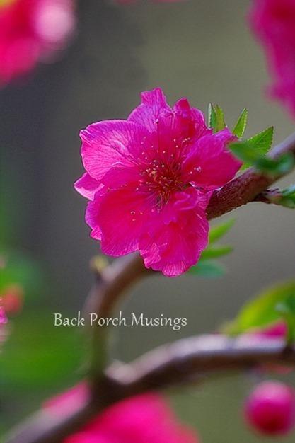 Peachy4