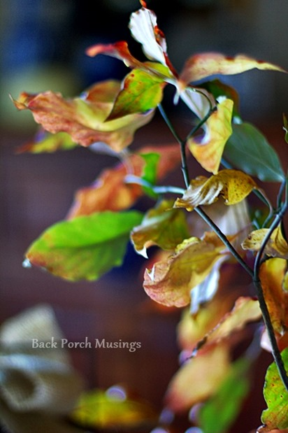 leavesandpheasantV
