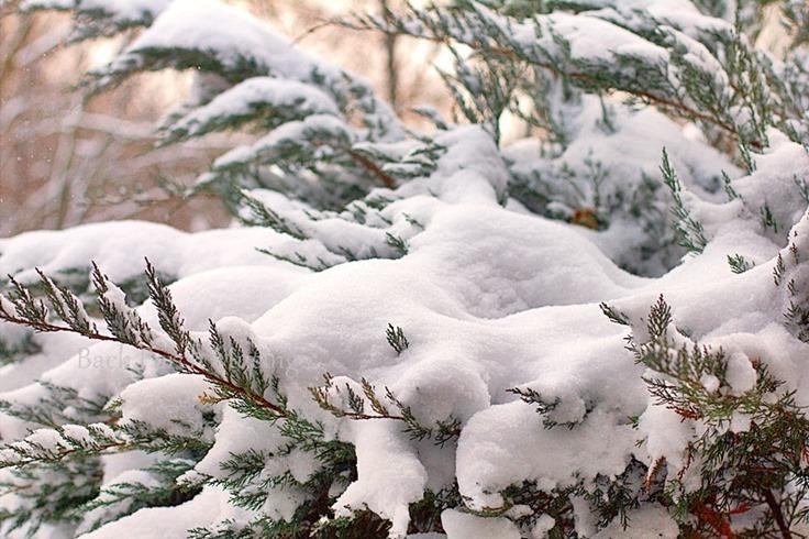 snow14e